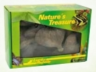 Lucky Reptile - Nature's Treasure - Deco Box