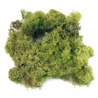 Dragon - Island Moss Green n.60g