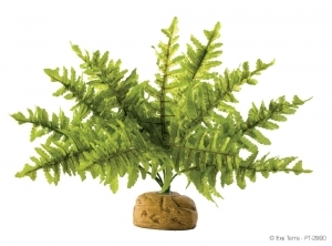 Exo Terra - Boston Fern S